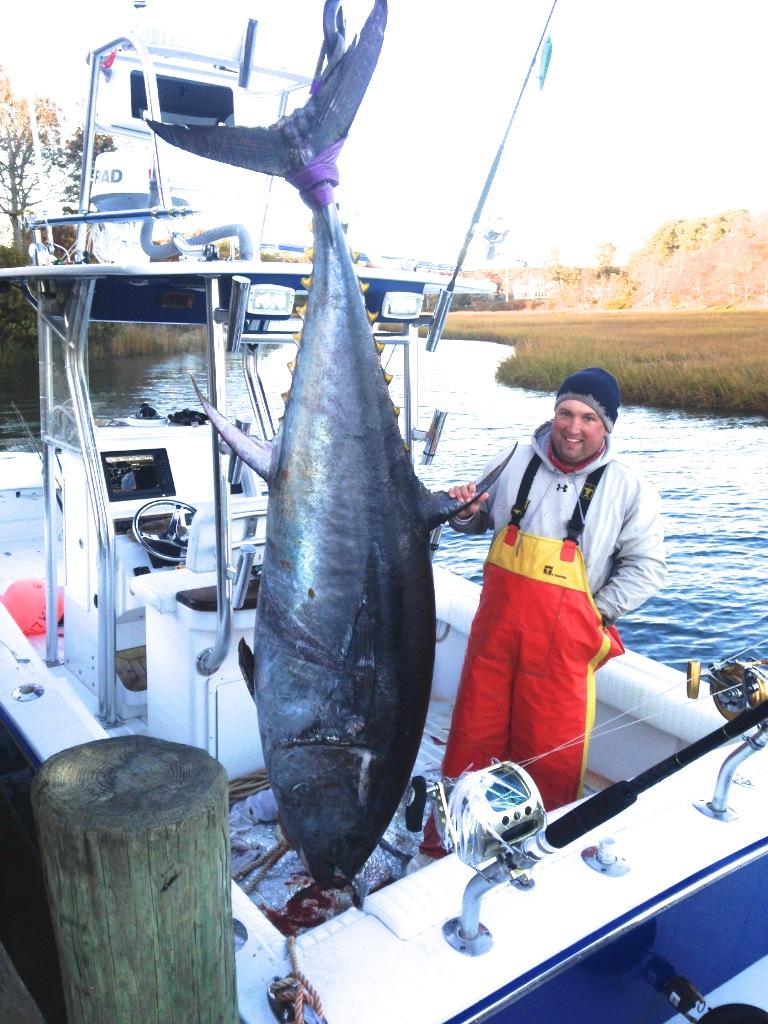 Fishing charters cape cod bluefin tuna dragonfly for Bluefin tuna fishing