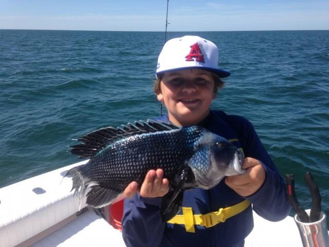 Black Sea Bass caught on Cape Cod