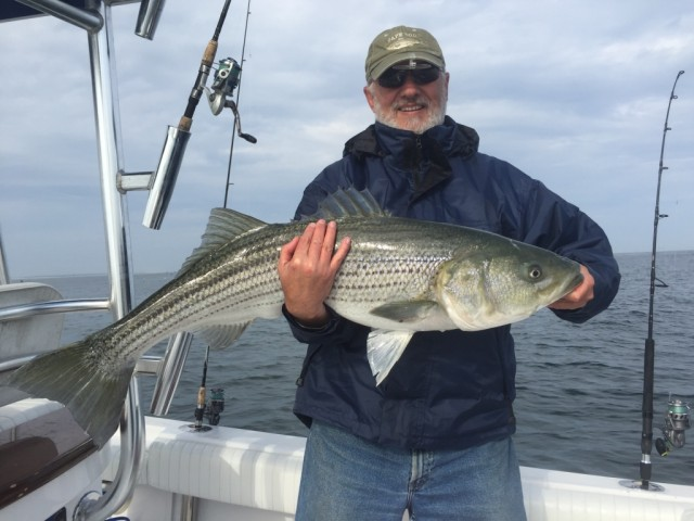 Striped Bass caught on Cape Cod