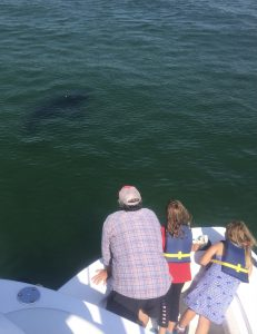 A family observing a white shark from the deck of the Dragonfly during a Cape Cod shark tour