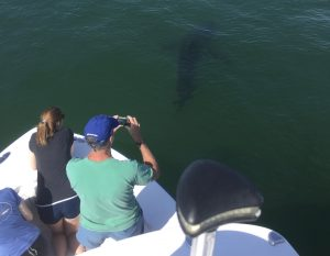 A man taking photos of a shark just feet from the boat during our Cape Cod shark tours